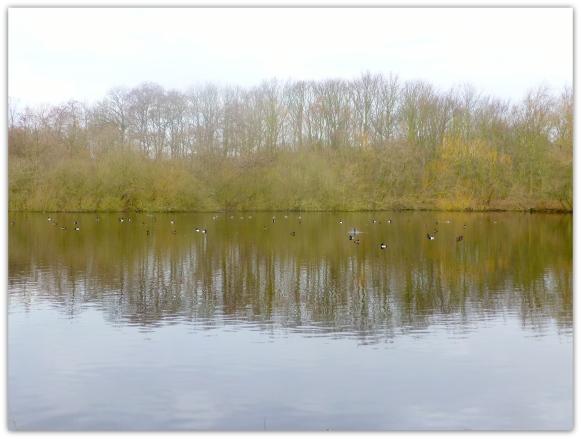 De vijver op Nieuw Leeuwenhorst. De weerspiegeling van de bomen aan de overkant in het water vind ik mooi.  Het zwart-witte verenkleed van de kuifeenden licht op tegen de donkere ondergrond.